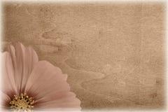 сбор винограда цветка grungy Стоковые Фото