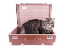 сбор винограда чемодана кота перский сидя Стоковое Фото