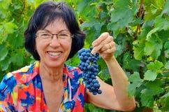 Сбор виноградины в винограднике, Тоскана, Италия Стоковое Изображение