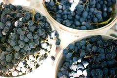 Сбор виноградин 11 Стоковые Фотографии RF