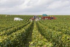 Сбор виноградников в Cuis Франции Стоковое Фото