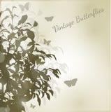 сбор винограда бабочки Стоковое Изображение