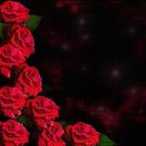 сбор винограда вектора типа роз иллюстрации карточки Стоковые Фотографии RF