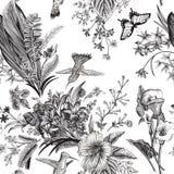 сбор винограда вектора флористической картины безшовный Экзотические цветки и птицы иллюстрация вектора