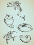 сбор винограда моря элементов Стоковые Фотографии RF