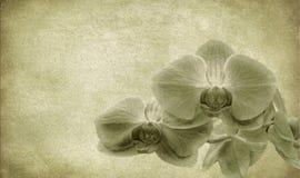 сбор винограда цветка предпосылки Стоковые Изображения RF
