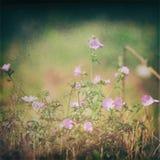 1 сбор винограда цветков Стоковые Фотографии RF