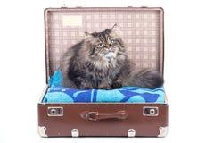 сбор винограда чемодана кота перский сидя Стоковые Фото