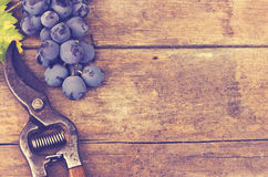 Сбор виноградины Стоковые Фотографии RF