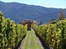 Сбор в винограднике стоковое изображение rf
