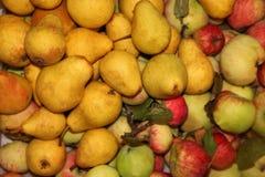 Сбор груши и яблока Стоковые Изображения