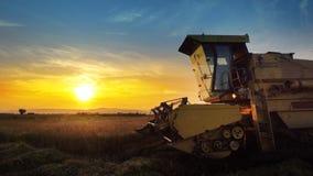 сбор жатки зернокомбайна овсы подрезывает на заходе солнца Стоковая Фотография RF