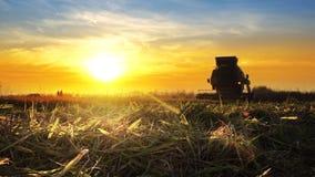 сбор жатки зернокомбайна овсы подрезывает на заходе солнца Стоковое Изображение