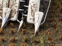 Сбор жатки зернокомбайна Стоковые Фотографии RF