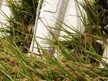 Сбор жатки зернокомбайна Стоковая Фотография RF