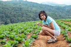 Сбор женщин и капусты в поле стоковое фото rf