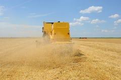 Сбор зернокомбайна Стоковое Фото