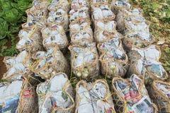 Сбор китайской капусты Стоковые Изображения RF