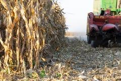 Сбор кукурузного поля с зернокомбайном стоковые изображения rf