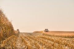Сбор кукурузного поля стоковое изображение
