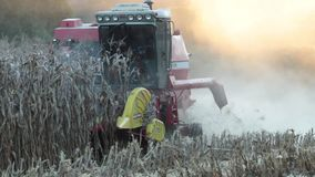 Сбор кукурузного поля на солнечный день сток-видео