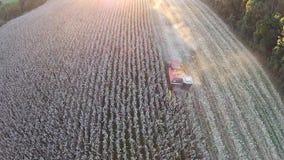 Сбор кукурузного поля с заходом солнца видеоматериал