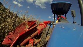 Сбор кукурузного поля с трактором видеоматериал