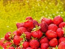 Сбор клубники Серии красных ягод Запачканная зеленая и желтая предпосылка Стоковое фото RF