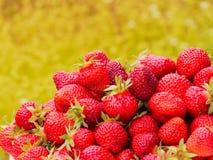 Сбор клубники Серии красных ягод Запачканная зеленая и желтая предпосылка Стоковые Изображения RF