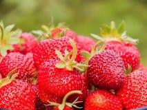 Сбор клубники Серии красных ягод зеленый цвет запачканный предпосылкой Стоковые Изображения RF