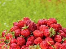 Сбор клубники Серии красных ягод зеленый цвет запачканный предпосылкой Стоковое Фото