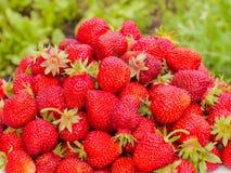 Сбор клубники Серии красных ягод зеленый цвет запачканный предпосылкой Стоковая Фотография RF