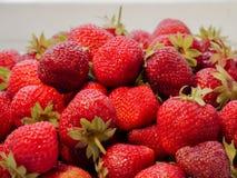Сбор клубники Серии красных ягод Стоковое Фото