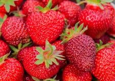 Сбор клубники Серии красных ягод Стоковое Изображение RF