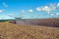 Сбор мозоли жаткой зернокомбайна, следовать путем разгржать и транспорт зерна Работайте в поле в лучах su стоковые фото