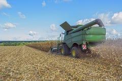 Сбор мозоли жаткой зернокомбайна, следовать путем разгржать и транспорт зерна Работайте в поле в лучах su стоковые изображения rf