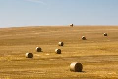 Сбор на поле Стоковая Фотография