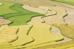 Сбор на террасных полях Стоковое Изображение