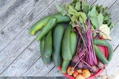 Сбор огорода стоковое изображение rf