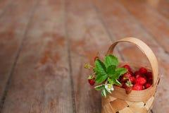 Сбор осени в деревне: сочные ягоды Стоковые Изображения RF