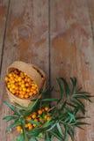 Сбор осени полезных ягод Стоковая Фотография RF