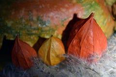 Сбор осени - цветки физалиса и оранжевая тыква стоковое изображение