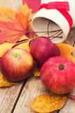 Сбор осени Яблока Стоковое Фото