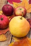 Сбор осени Яблока Стоковая Фотография