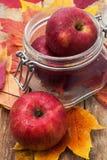 Сбор осени Яблока Стоковые Изображения