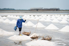 Сбор лотка соли Стоковая Фотография