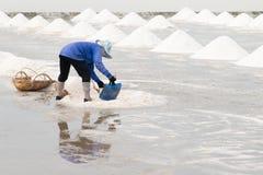 Сбор лотка соли Стоковое Фото