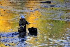 Сбор пруда Стоковое Изображение