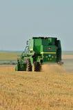 Сбор пшеницы с жаткой зернокомбайна Стоковые Фото