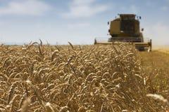 Сбор пшеницы Стоковое Фото